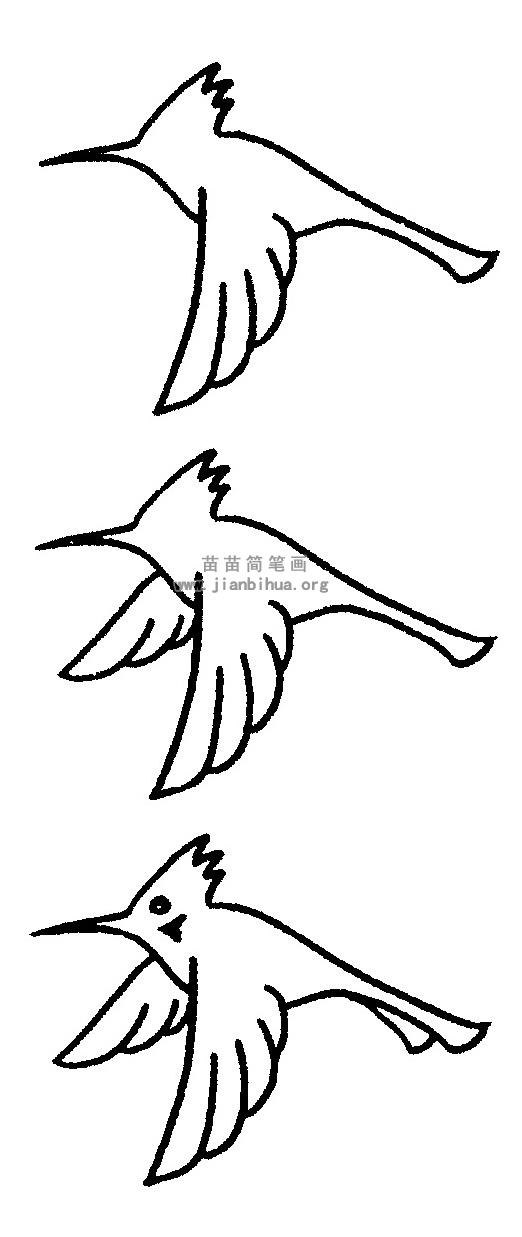 蜂鸟简笔画